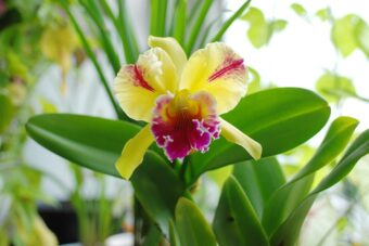 How to Repot Cattleya Orchids using Styrofoam Peanuts