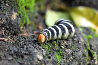 How to Deal with Common Pests and Diseases Found in the Garden